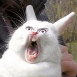 Funny Animals (@tanyastorm)